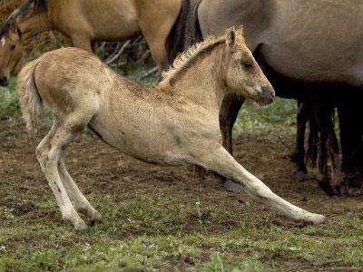 baby-horse-stretch