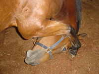 bowing-horse-1403647