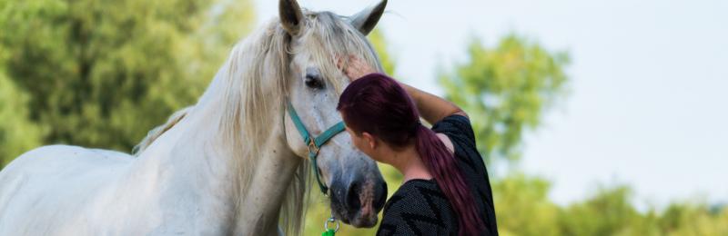Nikki van Olst – Positive Horsemanship